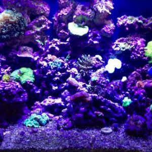 90 gallon reef @ 10 months