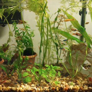 20170905 15g planted tank cr2
