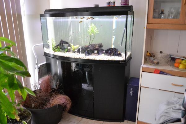 45 Gallon Bow Front Aquarium 1000 Aquarium Ideas